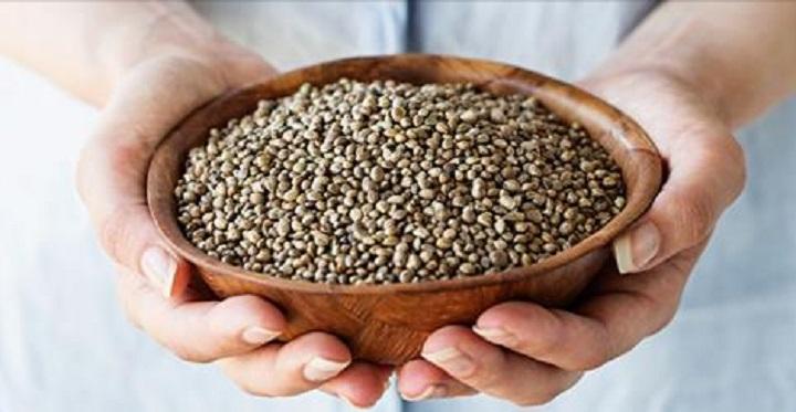 Hemp, Inc  Secures CBD-Rich Hemp Seeds, Plans to Plant Over