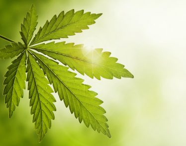 Cannabis Wheaton