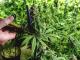 Cannabis Stocks Down