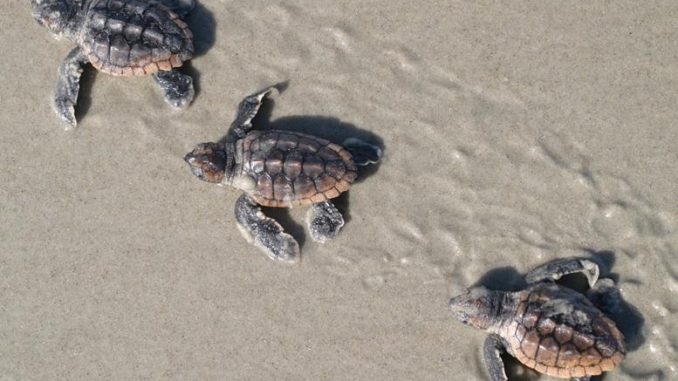 Turtle Beach Corp