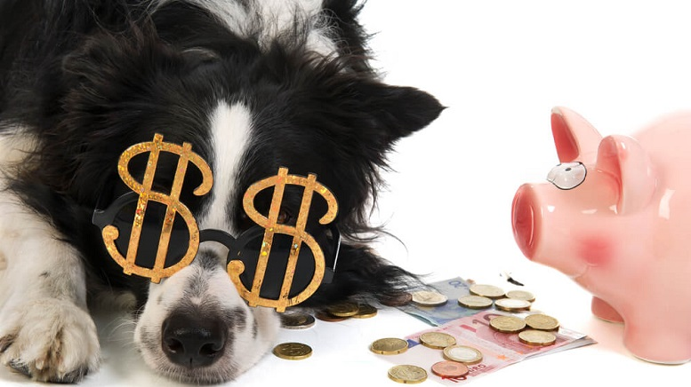 Pets Have Become A Big Money Business So Watch These 3 Pet Stocks